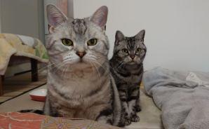 今年の流行語大賞を2匹の猫が予想!?