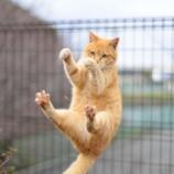『【不思議体験】子どもの頃に助けた猫が恩返しに来た』の画像