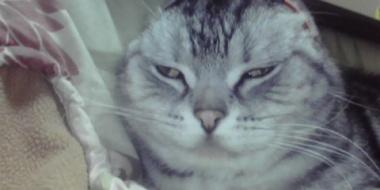 猫って可愛いよねー
