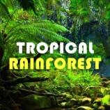 『HiLIQ Tropical forest トロピカルフォレスト リキッド』の画像