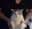 「うしろで自分を抱っこしているはずの人間が目の前にいる」ことに気付いたうちの猫の顔