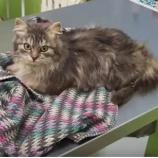 『ロシア人「猫が凍ってたから解凍してみたwwww」』の画像