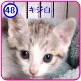 『里親募集 【キジコ】48』の画像