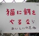 和歌山「野良猫の餌やり禁止な」 パブコメ「野良猫が餓死しちゃう」 和歌山「…じゃあ弱ってるのはOKな」
