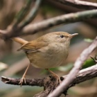 『投稿:BORGによる野鳥3種 2021/01/21』の画像