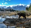【画像】 全米を冒険する猫がネットで人気