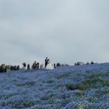 『ネモフィラの丘』の画像