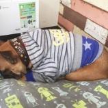『ペットの『ごめん寝』かわいいですよね☆』の画像
