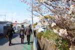 交野の桜を訪ねてみた①~JR河内磐船駅のところ~