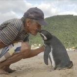 『命の恩人に会いたくて毎年8000km旅するペンギン』の画像