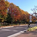 『上戸田イルミネーション点灯式』の画像