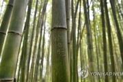 京都の観光地の竹にハングルで落書き 韓国メディアでも報じられ「恥ずかしい」「反省しろ」の声