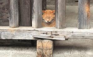 さい銭箱の真横で「猫ちゃん発見」