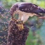 【閲覧注意】鳥さん「スズメ蜂うんめーwww」