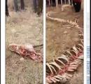 中国で龍の白骨死骸が発見される。体長18m手足も残存。