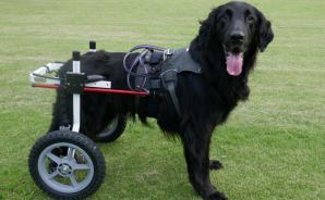 犬用の車いすをレンタルしてみた