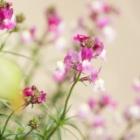 『ピノ子の庭も春ランラン』の画像