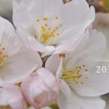 『【動画】 2019年03 四谷 桜 (RX1 Xc Zenfone 5z)』の画像