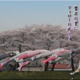 『磐井川の桜並木』の画像