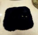 【黒猫】セルフィー(自撮り)大好きな人間のせいで家が決まらないニャ... あの猫たちがピンチ/英国