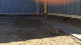 【でかい】公園でヤバイ生き物見つけたwww(※画像あり)