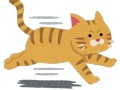 【朗報】スポーツ紙のカメラマンさん、ハマスタ乱入ネコをめっちゃ綺麗に撮影してしまう(画像あり)