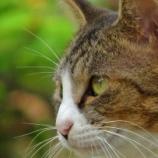『【写真】 中山の猫! ~猫たちの宴2~ 』の画像