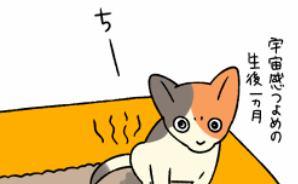 飼い猫が冬にトイレを失敗する理由
