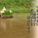 『田植え日和』の画像