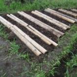 『ヒマワリ畑を耕して竹材マルチを敷いてみた』の画像