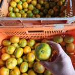 減農薬野菜、果物、お花、こだわりのうつわのお店 - 花うつわ大地(花咲農園) -
