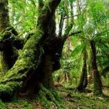 『タスマニアの太古の森を守る』の画像
