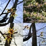 『春の気配が。。。』の画像