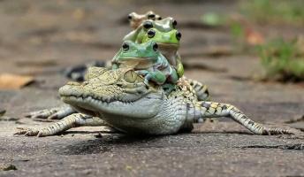 【悲報】カエルさん、調子に乗ってしまう