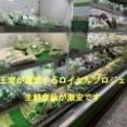 【旅】 週末プチ旅行 チェンマイ編 野菜がメッチャ安い!タイ王室が運営するお店 Royal Project Shop at チェンマイ大学キャンパス内