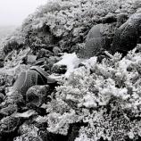 『雪の日の植物』の画像