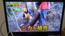 【話題】「動物を犠牲にするな!」 ヴィーガン&ミニマリスト&れいわ支持者の男性がシカ狩猟番組に発狂