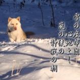 『フォト短歌「雪の座布団」』の画像