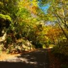 『奥利根紅葉ライン・水源の森野営場』の画像