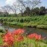 川の土手で見られたヒガンバナと美しい水の景色の組み合わせ!!
