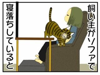 寝落ちする飼い主と猫