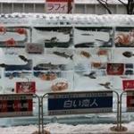 さっぽろ雪まつりの「魚氷」、今年は中止…