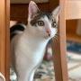 【写真日記】激写。猫の瞳の色が変わる過程