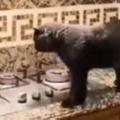 【ネコ】 台所で料理を作っていた。我らの食事はまだか? → 猫四天王はお待ちのようです…