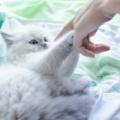 寵物用藥常識—藥物的作用