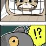 先住猫になったチャム