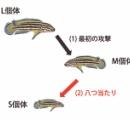 八つ当たり行動を行う魚が発見されるww