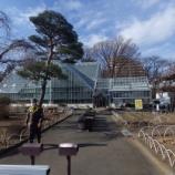 『1月の都立薬用植物園Ⅱ;小平市』の画像