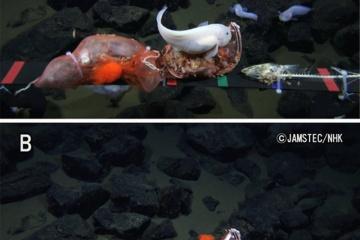 【深海探査】マリアナ海溝の水深8,178mにおいて魚類の撮影に成功 魚類の世界最深映像記録を更新