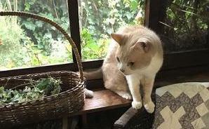 決して色あせない 猫との思い出